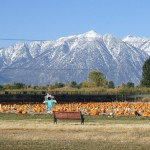 pumpkin ranch